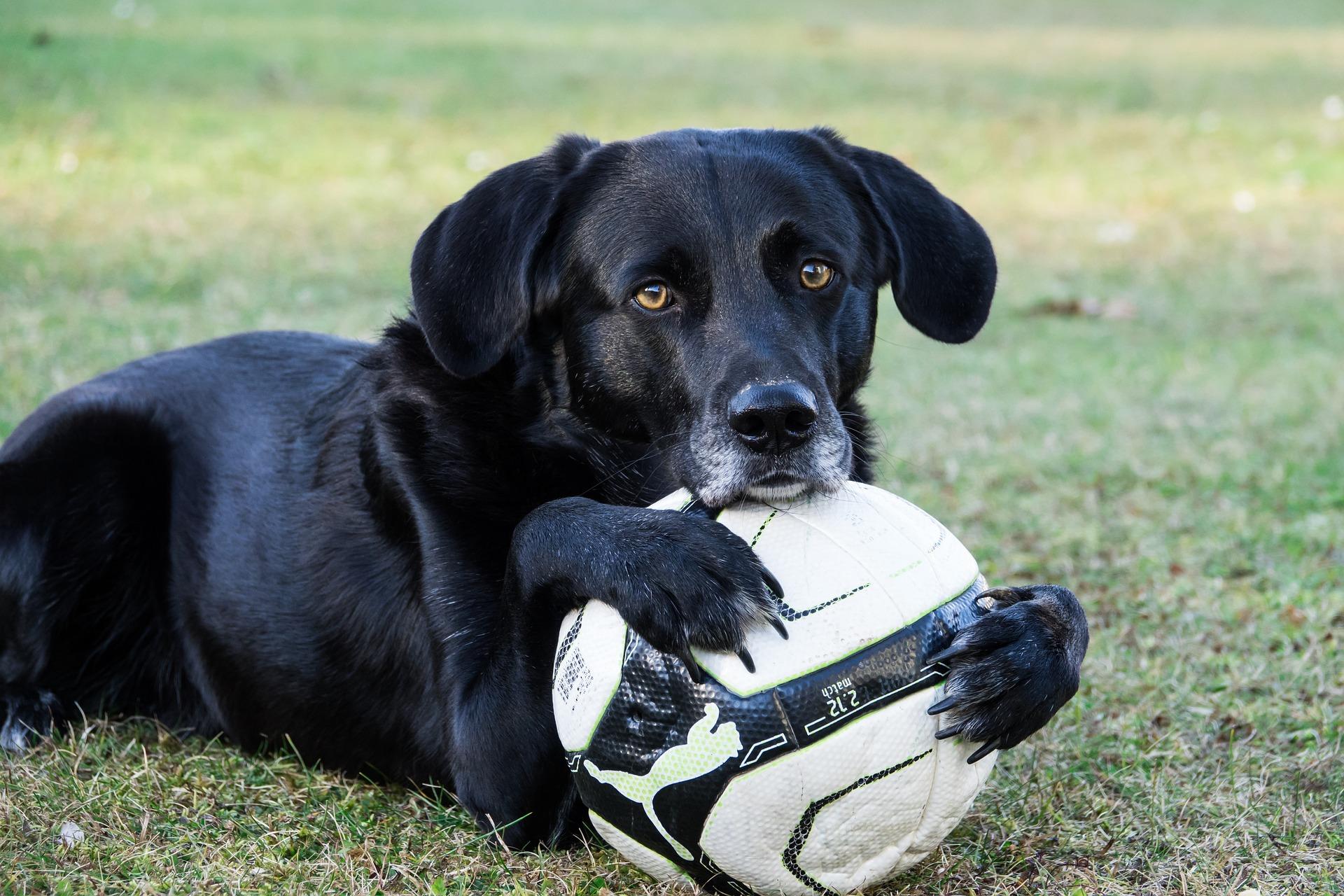 כלב עם כדור