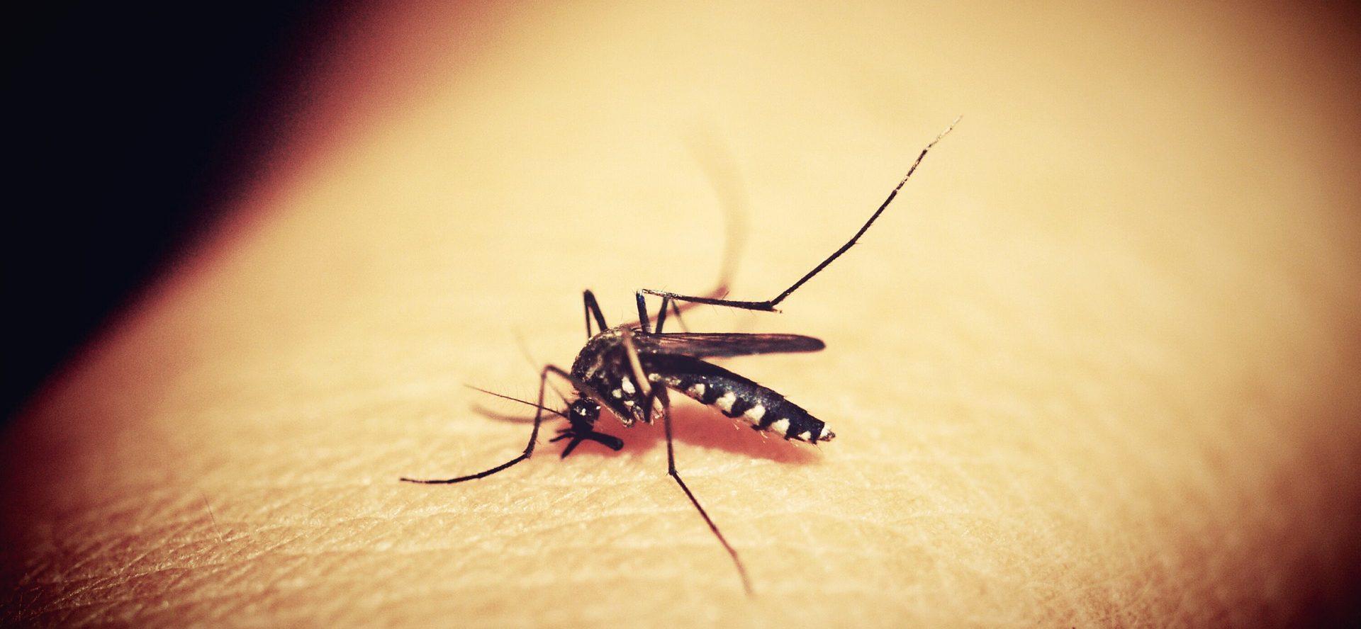 עקיצת יתוש
